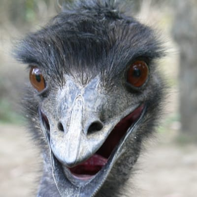 Emu - De Zonnegloed - Animal park - Animal refuge centre